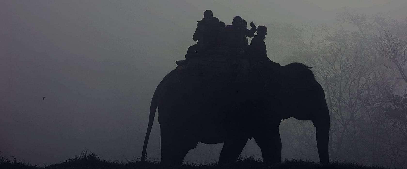 Mosaic Adventure no longer offers Elephant Riding tours