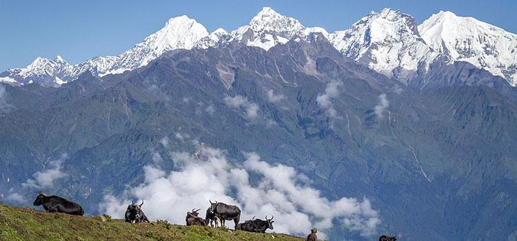 langtang valley trek itinerary